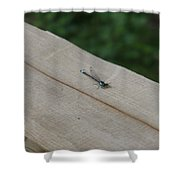 Blue Tipped Dragon Fly Shower Curtain
