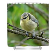 Blue Tit In A Cherry Tree Shower Curtain