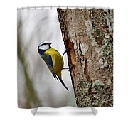 Blue Tit Searching Home Shower Curtain