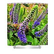 Blue Veronica Flowers   Digital Paint Shower Curtain