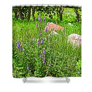 Blue Vervain And Rocks In Pipestone National Monument-minnesota  Shower Curtain