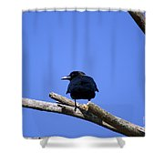 Blue View Shower Curtain