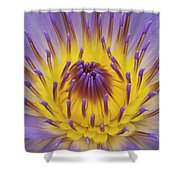 Blue Water Lily Shower Curtain by Heiko Koehrer-Wagner