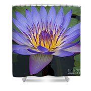 Blue Water Lily - Nymphaea Shower Curtain by Heiko Koehrer-Wagner