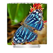 Blue Wave Butterfly Shower Curtain