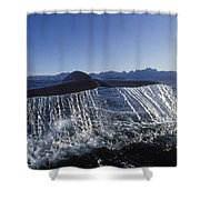 Blue Whale Tail Sea Of Cortez Shower Curtain