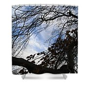 Blue White Tree Shower Curtain