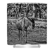 Blue Wildebeest-black And White Shower Curtain