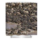 Blue Wildebeest Migration Shower Curtain