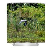 Blue Winged Heron 2013 Shower Curtain