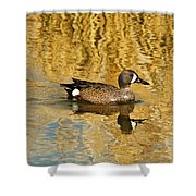 Blue Winged Teal 2 Shower Curtain