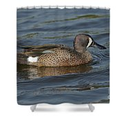Blue-winged Teal Shower Curtain