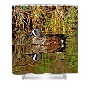 Blue-winged Teal Drake Shower Curtain