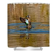 Blue-winged Teal Flapping Shower Curtain