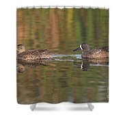 Blue-winged Teal Pair Shower Curtain