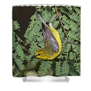 Blue-winged Warbler Shower Curtain