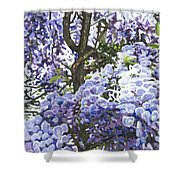 Blue Wisteria Shower Curtain