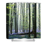 Bluebell Forrest 1 Shower Curtain