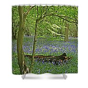 Bluebell Wood 1 Shower Curtain