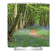 Bluebell Wood 3 Shower Curtain