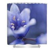 Bluebells 5 Shower Curtain