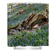 Bluebells At Bransdale Shower Curtain
