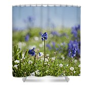 Bluebells In Sea Campion Shower Curtain