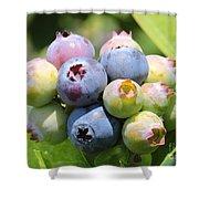 Blueberries Closeup Shower Curtain