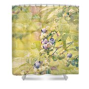 Blueberries Painted On The Wall Shower Curtain by Alanna DPhoto