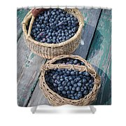 Blueberry Baskets Shower Curtain