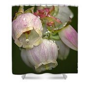 Blueberry Blossoms Shower Curtain