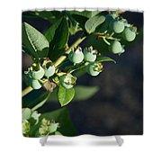 Blueberry Branch Shower Curtain