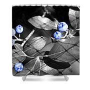 Blueberry Magic Shower Curtain