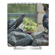 Bluejay And Mockingbird Shower Curtain