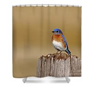 Bluebird At His Post Shower Curtain