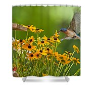 Bluebird Flying Over The Black Eyed Susans Shower Curtain