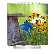 Bluebird Flying Thru Black Eyed Susans Shower Curtain