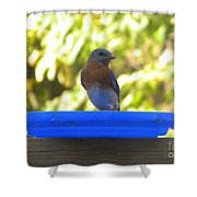 Bluebird Frisbee Shower Curtain