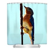 Bluebird Hangin Shower Curtain