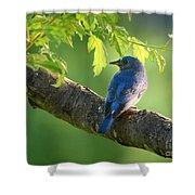 Bluebird In The Morning Shower Curtain