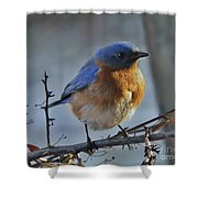 Bluebird In The Snow. Shower Curtain