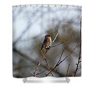 Bluebird In The Sun Shower Curtain
