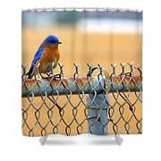 Bluebird On A Fence Shower Curtain