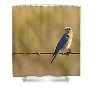 Bluebird On A Wire Shower Curtain