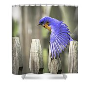 Bluebird On The Fence Shower Curtain
