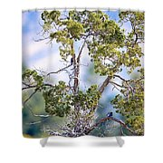 Bluebird Tree Shower Curtain