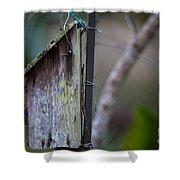 Bluebird With Nest Material In Beak Shower Curtain