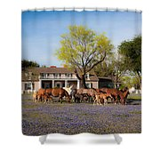 Bluebonnet Heaven Shower Curtain