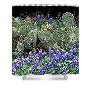 Bluebonnets And Cacti Shower Curtain