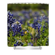 Bluebonnets In Spring Shower Curtain